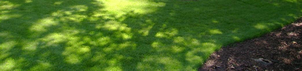 Schattenrasen - Kann so schön grün sein